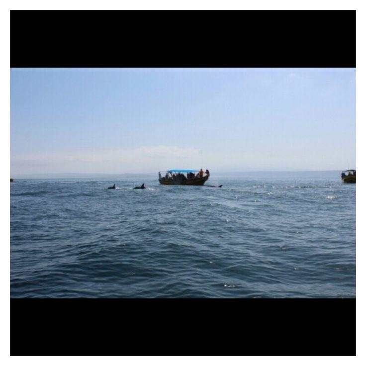 Delfines nadando cerca de un bote de avistamiento de animales de la isla de Chañaral de Aceituno.