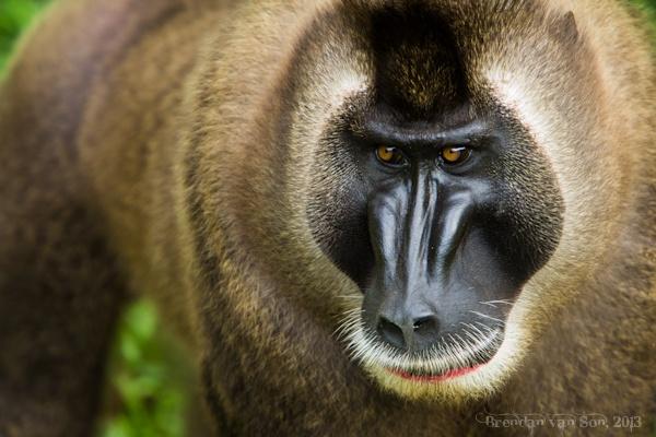 Afi-Drill-Ranch Drill Monkey