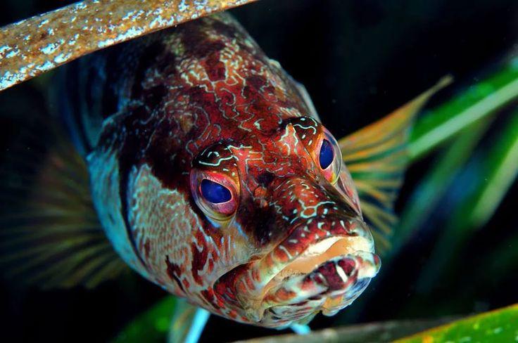 Foto: #EudiPhoto: migliori foto subacquee #EudiMovie: migliori video subacquei #EudiMovieDiving: migliori video con il vostro Diving in vista!  I premi in caso di vittoria sono bellissimi, in più con Eudi Movie Diving anche solo partecipando ti regaliamo l'ingresso a #EudiShow2017 !  Scoprili tutti sul nostro #website: http://www.eudishow.eu/visitatori/contests/