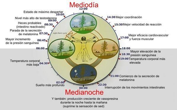 Reloj Circadiano