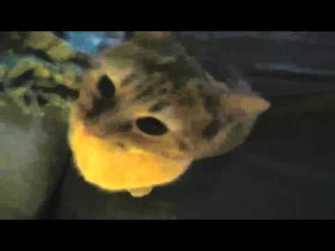 Funny Videos 2016  Funny Cats Video   Funny Cat Videos Ever   Funny Animals Funny Fails 2016 - http://positivelifemagazine.com/funny-videos-2016-funny-cats-video-funny-cat-videos-ever-funny-animals-funny-fails-2016-7/ http://img.youtube.com/vi/3YUWG11D-Ac/0.jpg                                             Funny Videos 2016 Funny Cats Video Funny Cat Videos Ever Funny Animals Funny Fails 2016 laugh, funny vines, best vines, funny, smile, try not to laugh, …    sourc