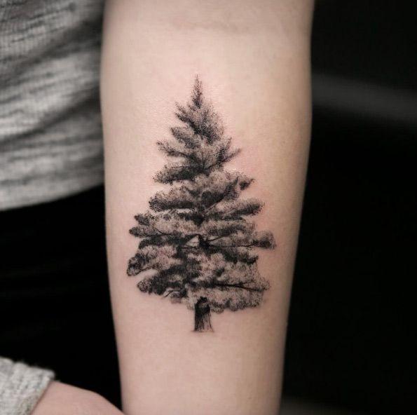02dc59e12a689 55 Magnificent Tree Tattoo Designs and Ideas   — Tattoos ON Women —    Evergreen tree tattoo, Evergreen tattoo, Tree tattoo designs