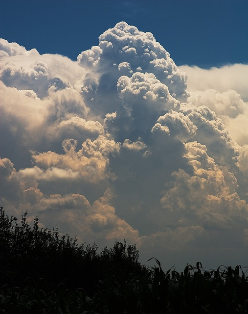 Cumulonimbus Clouds are low thunder clouds that bring hail, strong wind, thunder and lightning. If you see these clouds it is time too close up shop because the storms are coming!the tops of these clouds usually  reach to 20,000 feet , with extreme instances as high as75,000 feet!