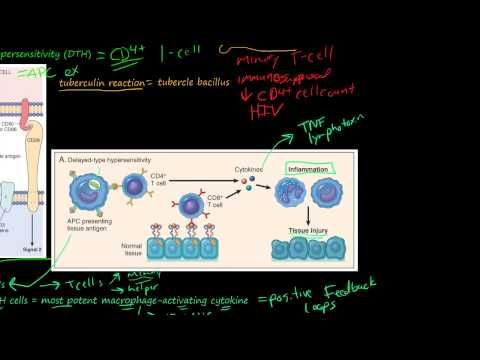 81P- Delayed-Type Hypersensitivity, T-Cell-Mediated (Type IV) Hypersensitivity - YouTube