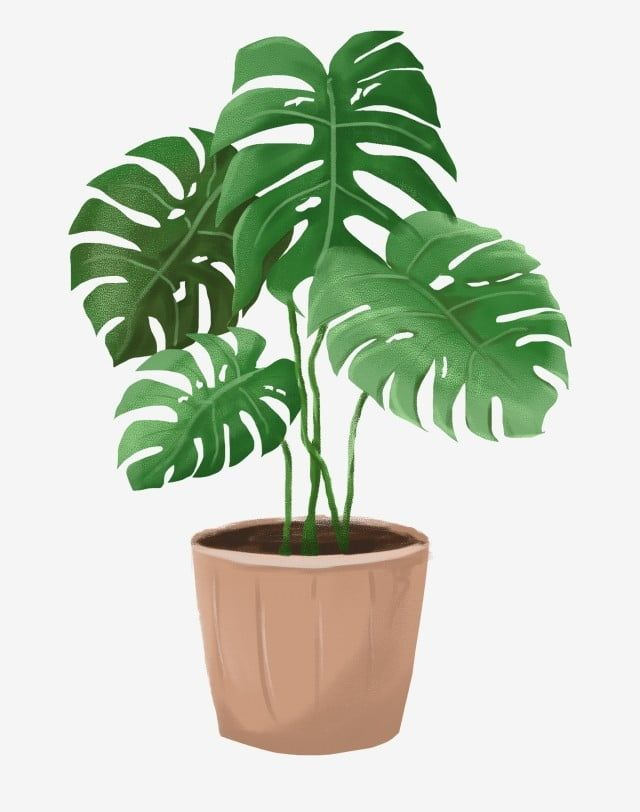 Hanging Plant Pots Png