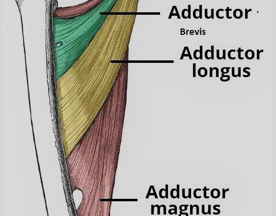 155 best Anatomy images on Pinterest | Anatomie, Lab und Medizinisch