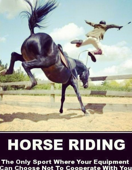 13 best Scary Horse Falls images on Pinterest | Horses ...