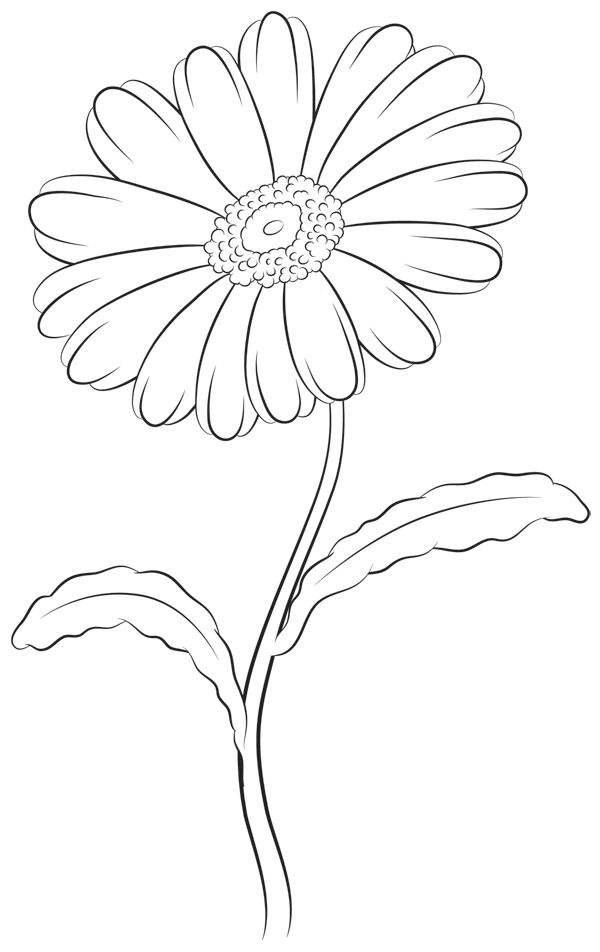 Simple Line Drawing Of A Flower : Best images about flowers clouds on pinterest