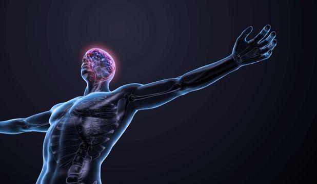 Cele 10 organe de care nu mai avem nevoie   Informatii utile