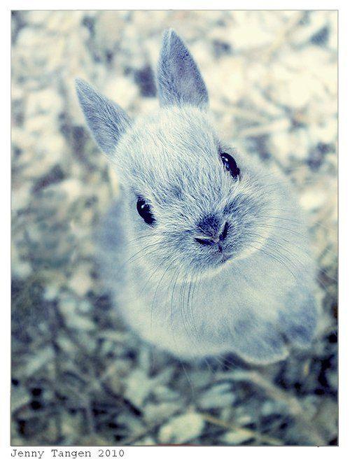 Awwww ! Rabbit