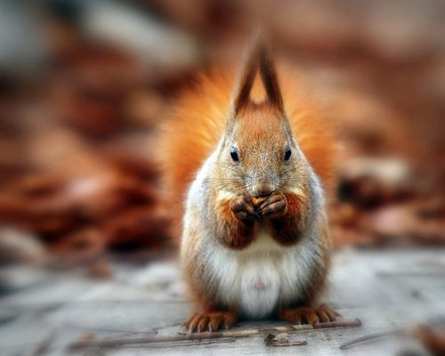 I'm nuts about you.....