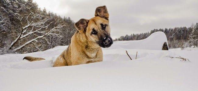 Co zrobić, gdy #pies złamie kończynę