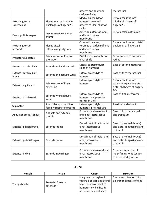 Muscle List Action Origin Insertion Mrs Smutz fisio Pinterest - muscle chart template