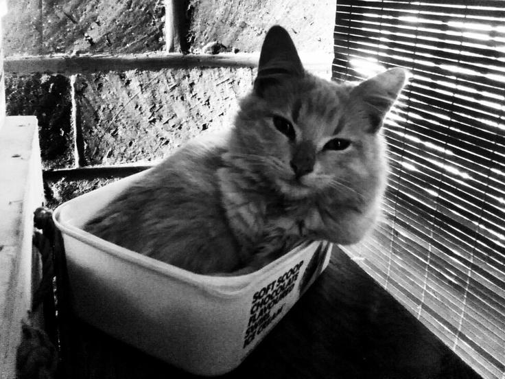 Soft scoop kitten #snapseed on xoom