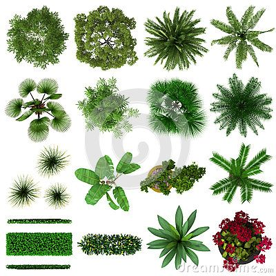 Tropical Plants Collection Top View by Dht0005, via Dreamstime