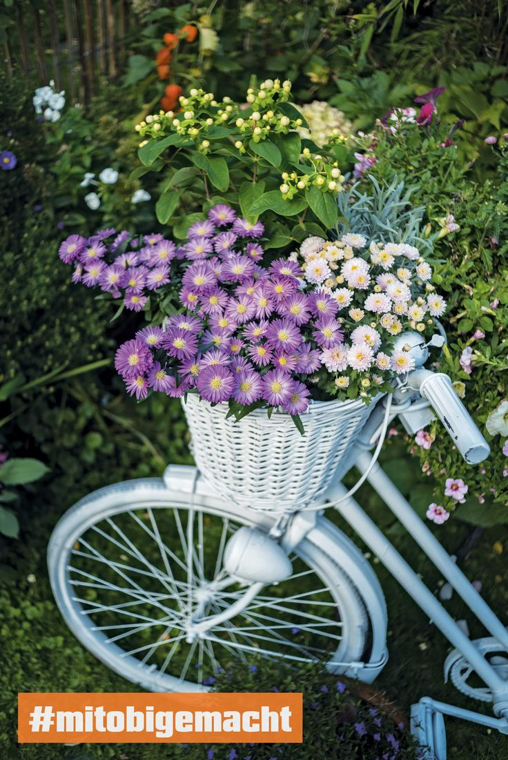 Diese Blumen Bringen Farbe In Den Garten Frhling Obi