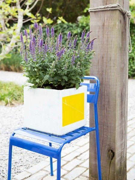 Mit seinen blauvioletten Blütenähren bringt der Steppensalbei vom Mai bis in den Spätsommer Farbe in den Garten.
