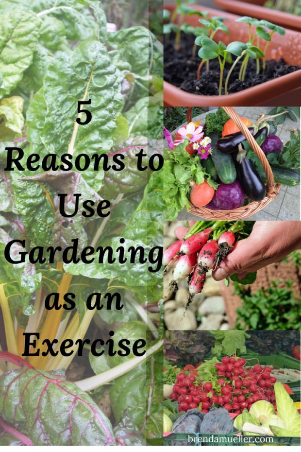 Learn How Gardening Can Give You A Serious Workout Organic