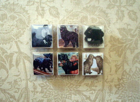 Newfie Pictures on Magnets
