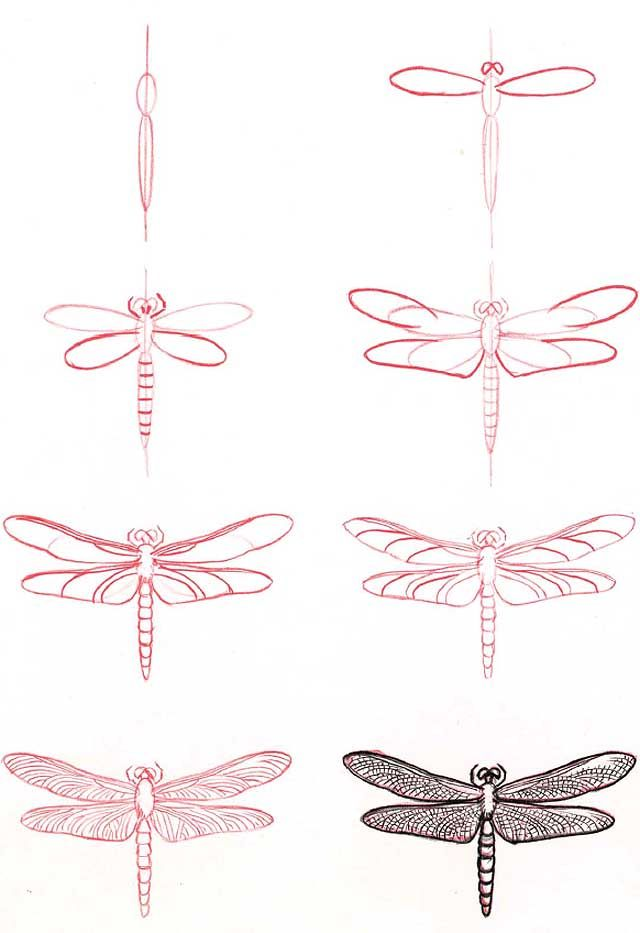 How to draw a dragonfly. Found on http://2011hairstylescindy.blogspot.com