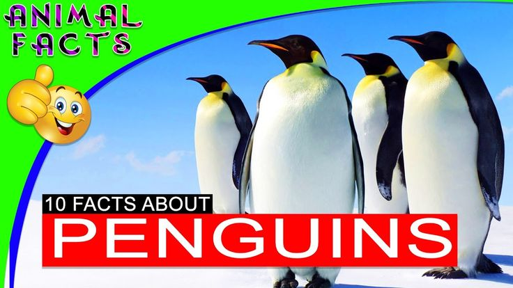 10 Fun Facts About Penguins for Kids