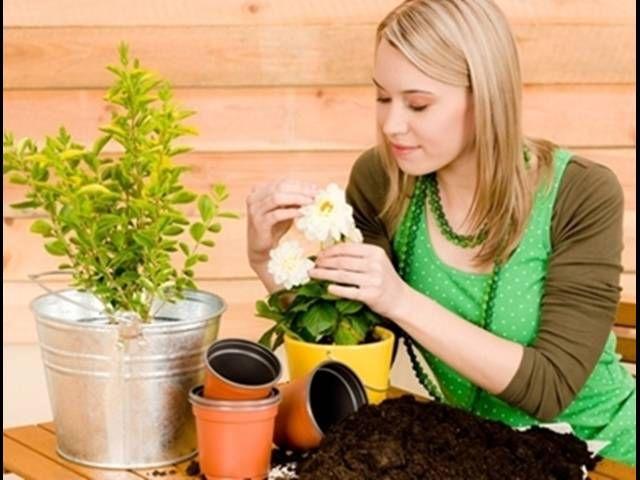 Pestovanie zeleniny v byte: Na balkóne aj za oknom - | Medzizenami.sk