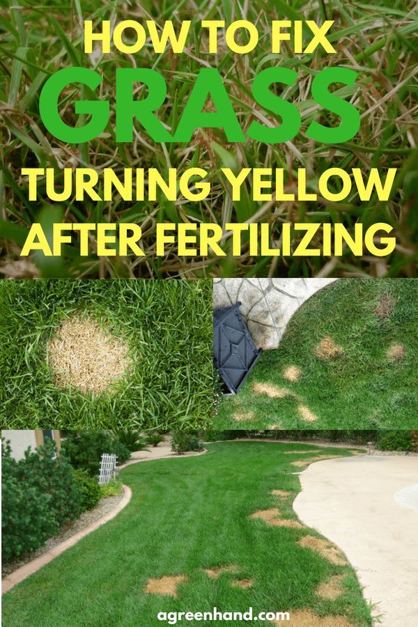 How to fix grass turning yellow after fertilizing grasses and gardens fandeluxe Gallery