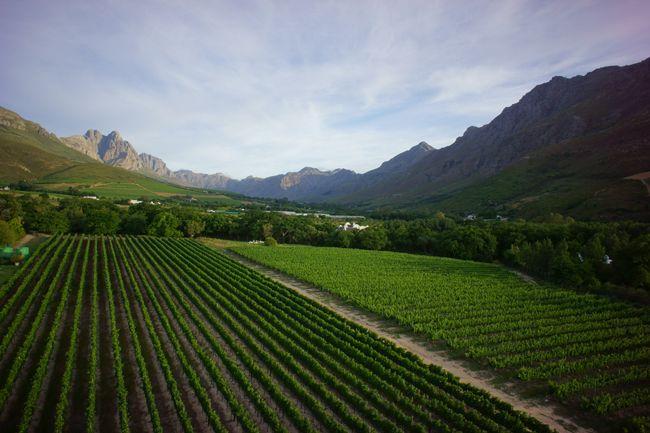 Lanzerc Estate Vineyards