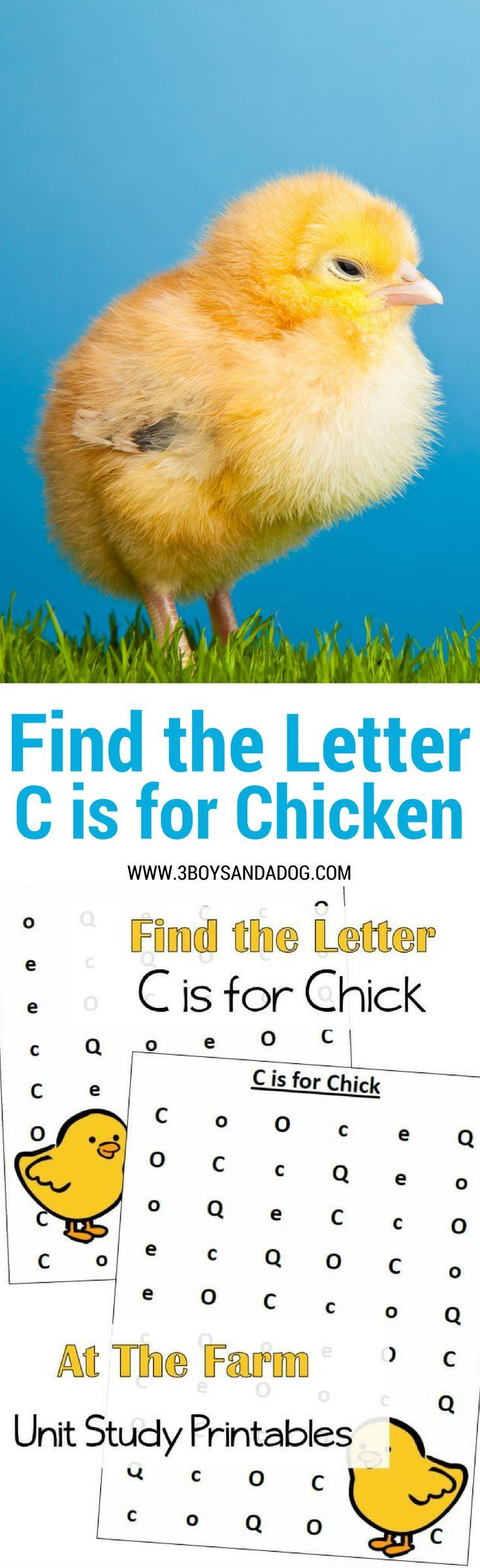 C is for Chicken homeschooling freebies – Free Homeschool Printables and Worksheets
