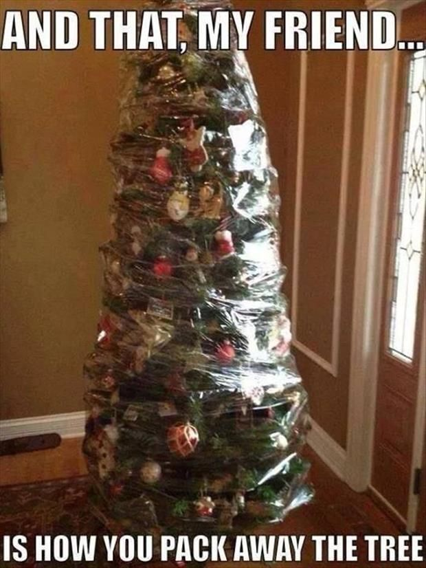 wrapped Christmas tree