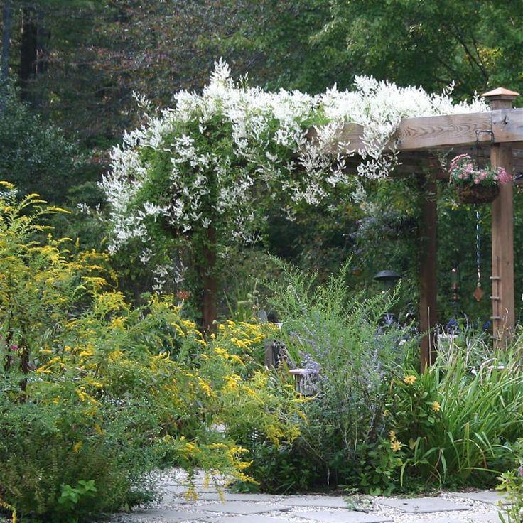 10 besten Schöne Kletterpflanzen Bilder auf Pinterest Hoch - hangematten fur terrasse garten sommerliches flair