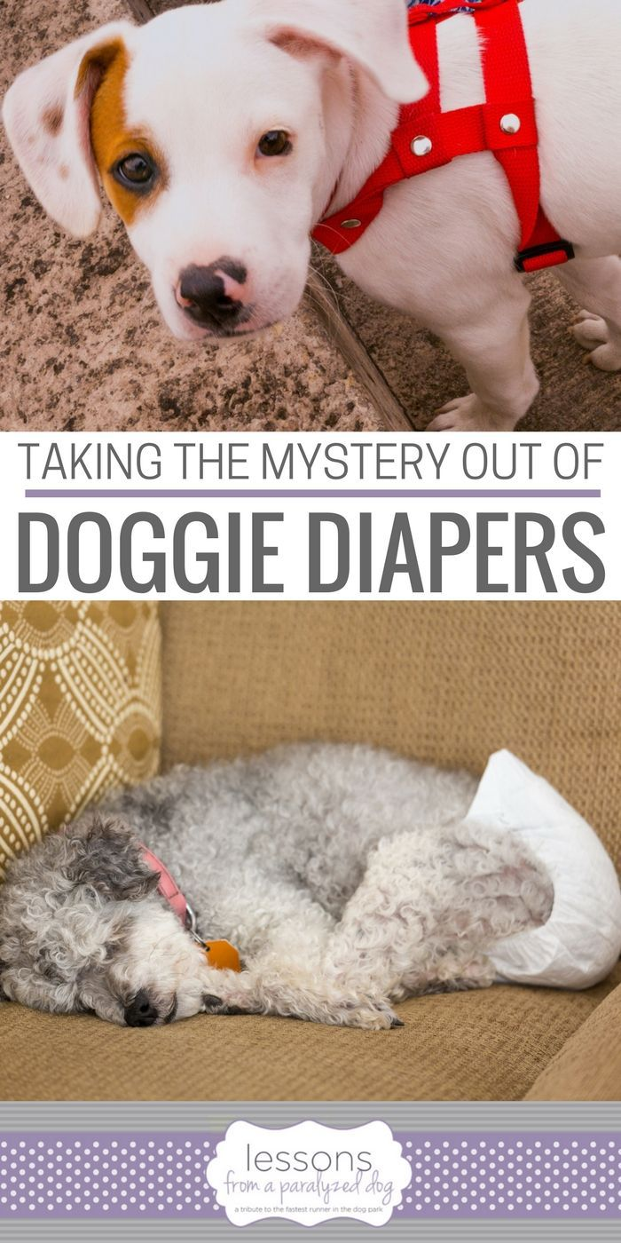 Taking The Mystery Out Of Doggie Diapers Paralyzed Dog Dog