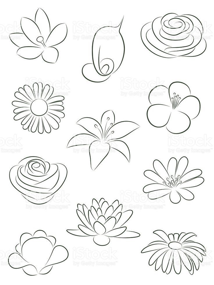 Set Of Flowers Vector Illustration En 2019 Flores Para