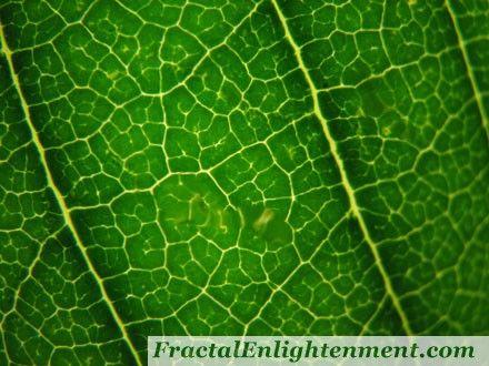 fractal geometry of nature pdf