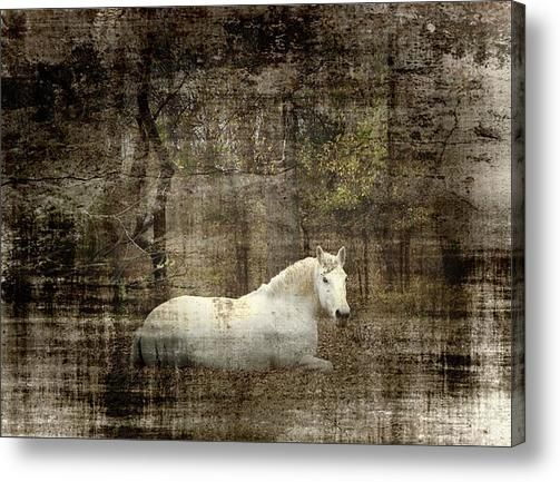 Mystic Forest Acrylic Print By Christy Leigh