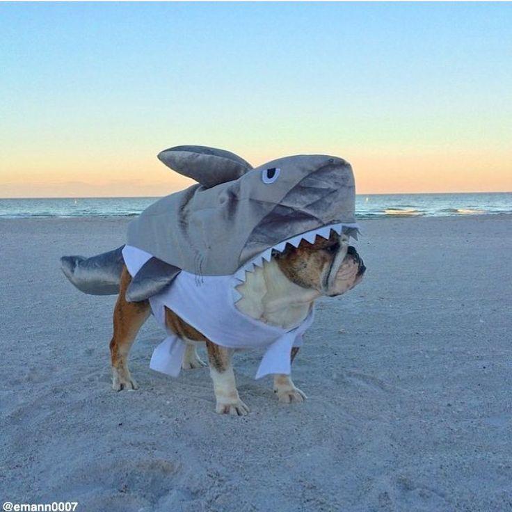 "944 Beğenme, 16 Yorum - Instagram'da Ethan (@emann0007): ""I found a shark that @m_phelps00 can out swim!  vs. # #bullyshark #nomonofinneeded #sharkweek…"""