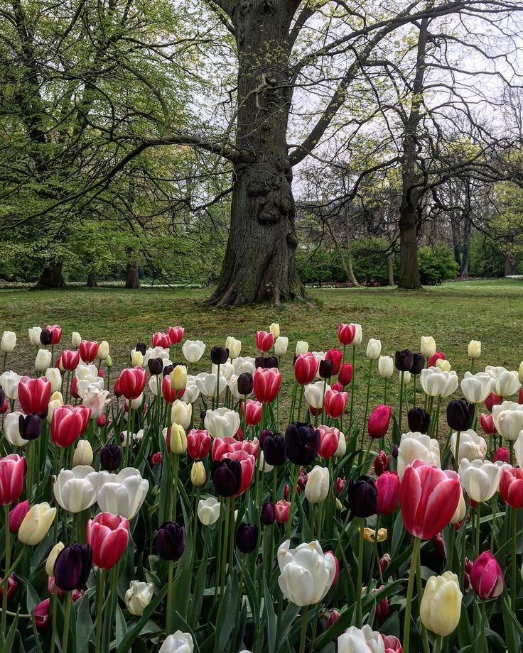 #tulipani#alberi#colori#belgio#floralia#bruxelles#verde#bianco#rosa#meraviglia#pace#paradiso