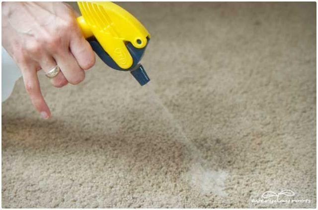 Eliminar las manchas de pis del perro de la alfombra