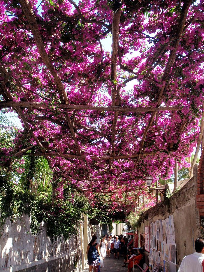Positano, Italy | 45+ Of The World's Most Magical Streets Shaded By Flowers And Trees  Posted By MMK on Jan 25, 2015