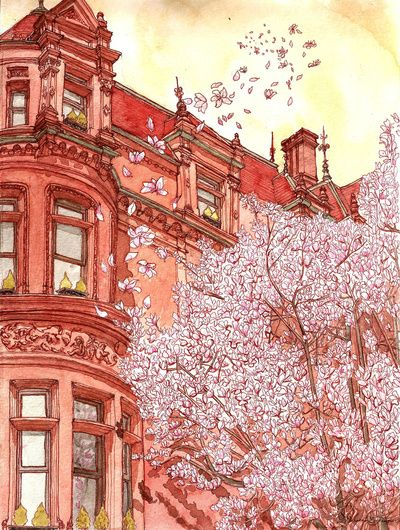 Bostonia by Sharon Gochenour: Cherries Blossoms, Watercolor, Art Illustrations, Art Prints, Pink Houses, Architecture, Bostonia Art, Sharon Gochenour, Water Colors