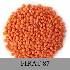 FIRAT87
