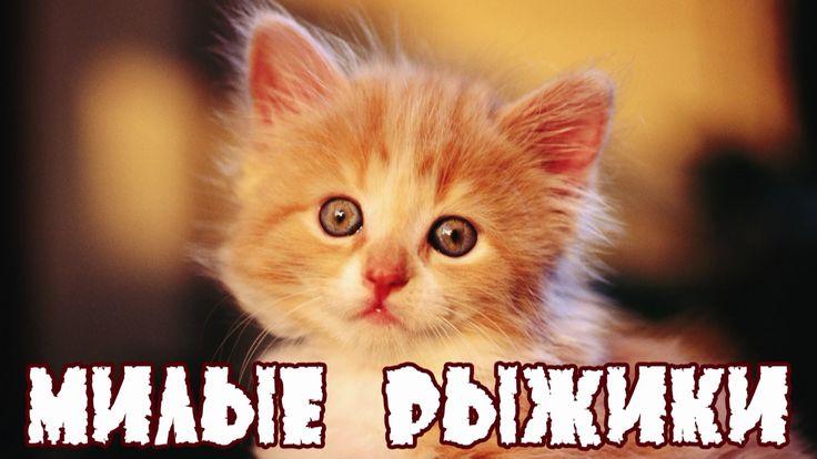 Милые рыжики Симпатичные рыжие котята