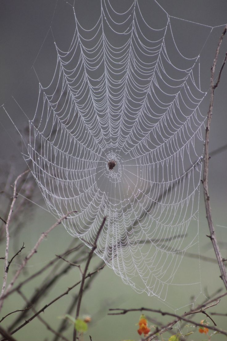 211 best MAGICAL SPIDER WEBS & SPIDERS images on Pinterest ...