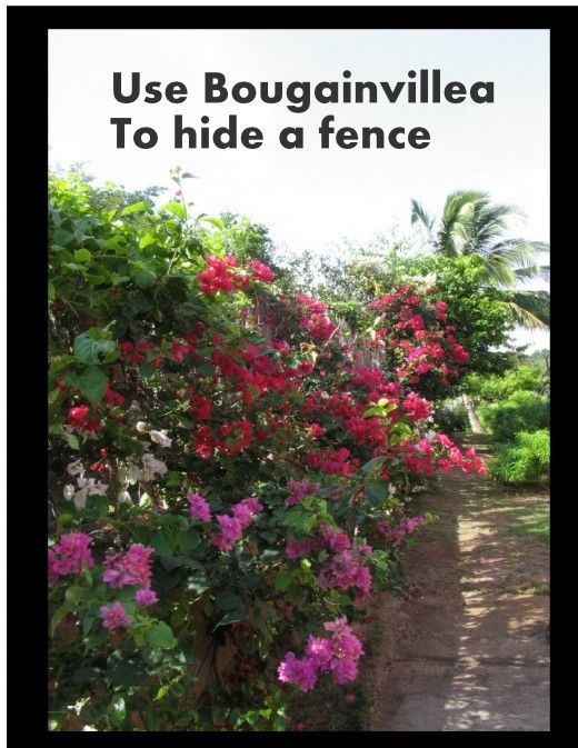 ideas to hide a fence google search