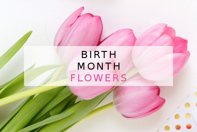 There is more to a birth month than stones. Learn more about birth month flowers - each one of them has a special meaning, symbolism and a wonderful story. #birth #month #flowers