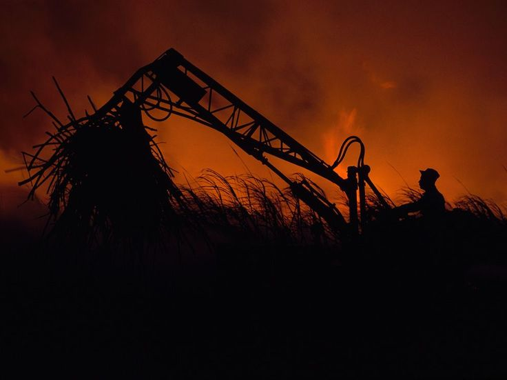 In a cane field in Puerto Rico, a mechanical loader is silhouetted against a blaze meant to burn away leaves and underbrush. The picture originally appeared in the December 1962 issue of National Geographic, one of dozens of color photos accompanying a feature story on Puerto Rico and its people.