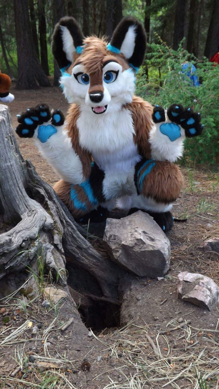 Fursuit Pursuits!