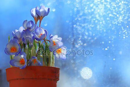 Bouquet di fiori di primavera — Immagini Stock #67865555