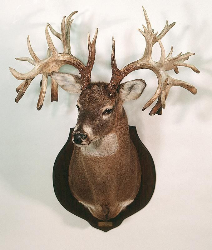 The Top 40 Typical and Nontypical Whitetails of All Time | Outdoor Life