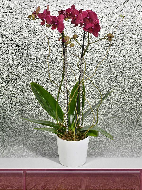 """Escicek.com 'un """"Sevgiyi, Zarafeti ve Gücü"""" temsil eden orkideleri sizler için hazırlanıyor."""